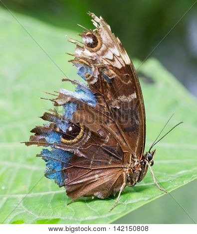 Butterfly In The Green Forest