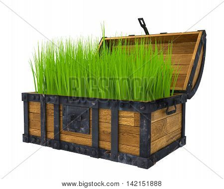 old chest filled with green grass, isolated image