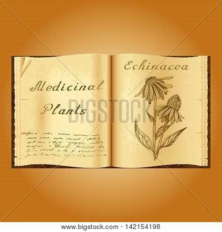Echinacea. Botanical illustration. Medical plants. Old open book herbalist. Grunge background. Vector illustration