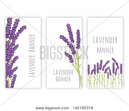 Vector floral set of colored lavender design elements. Spring or summer lavender hand drawn banners.