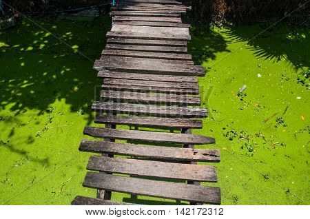 old wooden bridge in a swamp with duckweed.