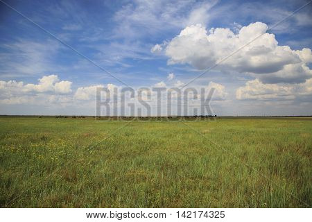 wild steppe in Askaina-Nova with deers and cloudy sky