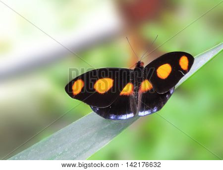 Orange butterfly, sitting on a tropical plant