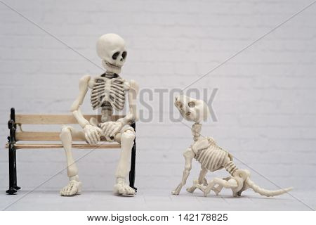 Skeleton and his playful skeleton puppy dog