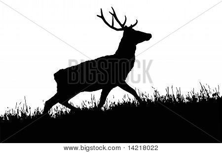 Vector Red Deer (Cervus elaphus)