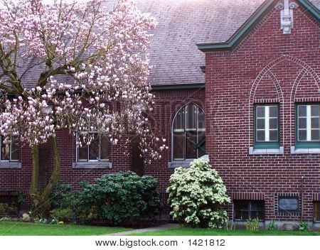 Brick Church And Flowering Tree