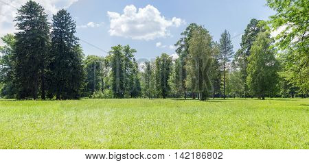 Panorama of a glade in a park with a deciduous and conifers trees on the background