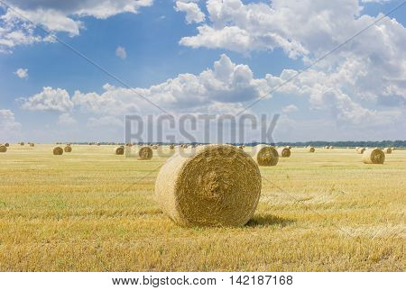 Large round straw bales of a barley on harvested field on a background of sky with clouds