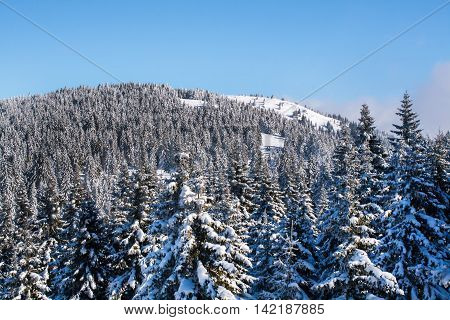 Vibrant aerial view panorama of the slope at ski resort, snowy pine trees, blue sky