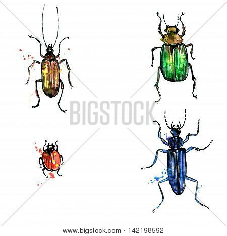 isolated beetles in different colors drawing by watercolor, hand drawn illustration