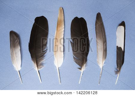 Various feathers on a blue paper background