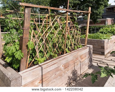 Raised garden beds in neighborhood garden with trellis