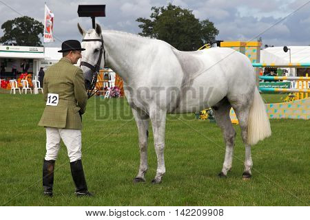 WEEDON, UK - AUGUST 27: An unnamed rider competing in one of the hunter class horse competitions stands his horse in line for judging at the Bucks County show on August 27, 2015 in Weedon