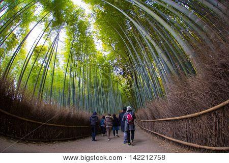 KYOTO, JAPAN - MARCH 24, 2016 : Path to bamboo forest, Arashiyama, Kyoto, Japan