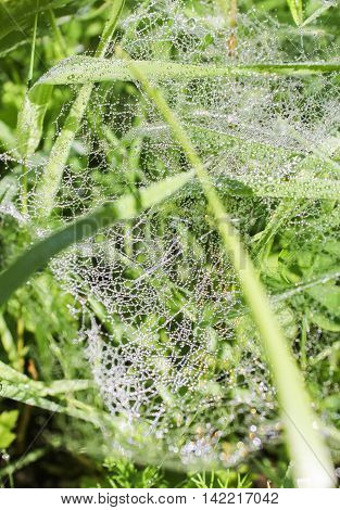 Spider web in the morning dew. Spider web in the morning dew on the grass.