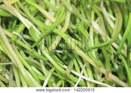 Fresh harvest of spring ramson or wild leek stems