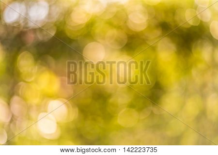 Abstract yellor bokeh background ( Blur )
