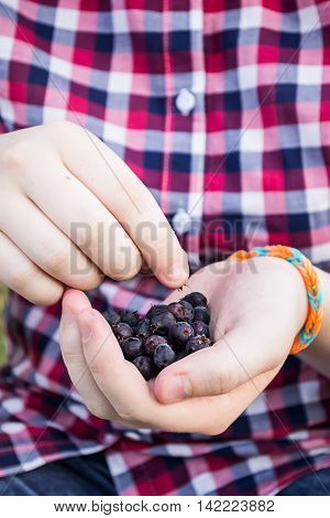 Dark berry in the hands of a teenage girl in a plaid shirt.