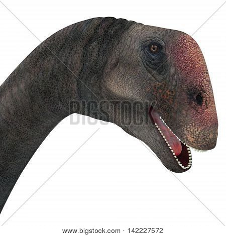 Brontomerus Dinosaur Head 3D Illustration - Brontomerus was a herbivorous sauropod dinosaur that lived in the Cretaceous Period of Utah USA.