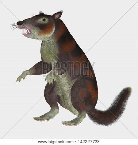 Cronopio Mammal on White 3D Illustration - Cronopio was a squirrel-sized mammal that lived with the dinosaurs in the Cretaceous Period of Argentina South America.