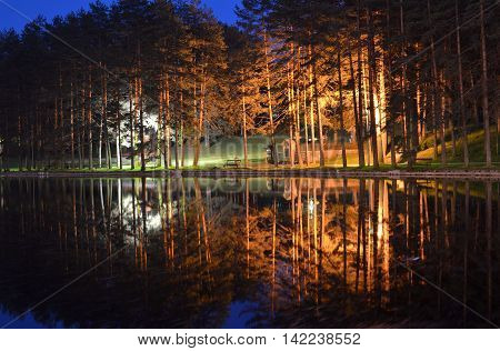 Trees And Lights Reflection On Water