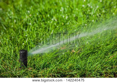 Irrigation system watering the lawn in the park