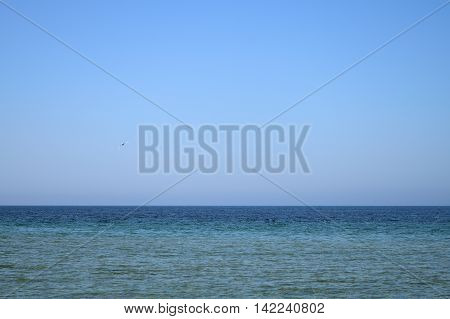 blue sky and clear sea gull flying background