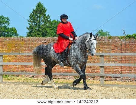 SAFFRON WALDEN, ESSEX, ENGLAND - JUNE 05, 2016: Dapple Grey horse  being exercised, rider wearing Elizabethan costume.