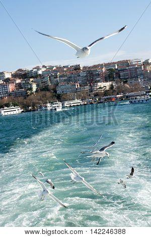 Seagulls flying in Bosphorus in Istanbul sky