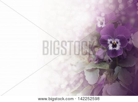 Pansies on a white background with bokeh.