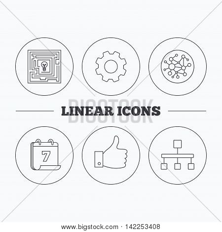 Global network, like and hierarchy icons. Maze linear sign. Flat cogwheel and calendar symbols. Linear icons in circle buttons. Vector