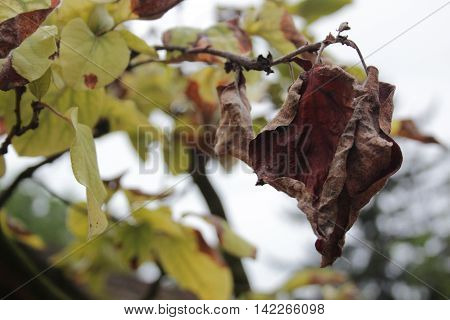 Photo of a dried out leaf representing end of sommer.