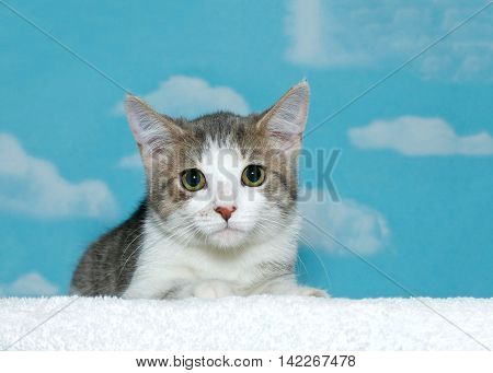 Short haired gray white and tan striped tabby kitten with wide open pupils in green brown eyes looking anxiously straight at viewer. Blue background sky with white clouds. Copy space