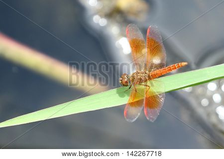 Image of dragonfly perched on grass green