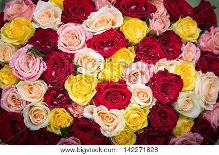 bouquet of multicolored roses with dew drops. Floral pattern.