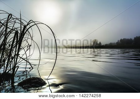 Beautiful river landscape with dawn mist and morning dew. Selective focus. Summer idyllic beautiful landscape.