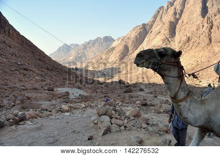 Mt Sinai Landscape with camel head fore ground