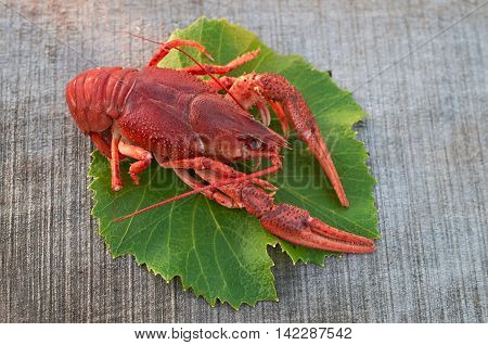 boiled crayfish on green leaves of grapes on a wooden surface
