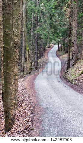 Asphalt road to nowhere in dark forest