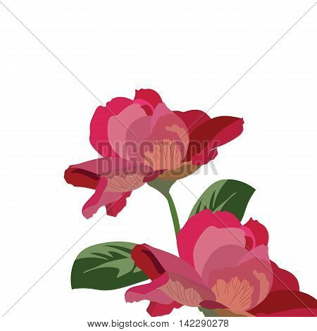 Roses isolated on white. Vector rose flower for background greeting or invitation card for wedding birthday Valentine's Day Mother's Day