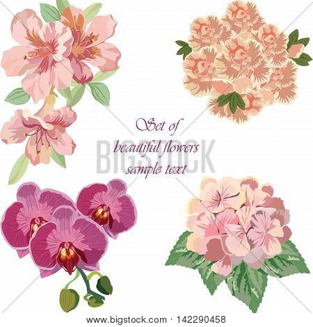 Spring Summer colorful Flower Set isolated Vector