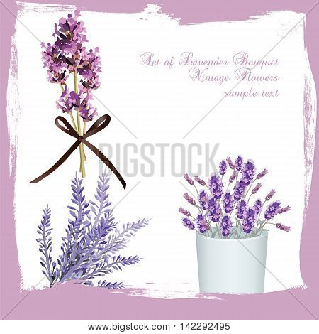 Lavender set bouquet collection Vector. Gentle blossom floral bouquet. Vintage Label with lavender beautiful fragrance