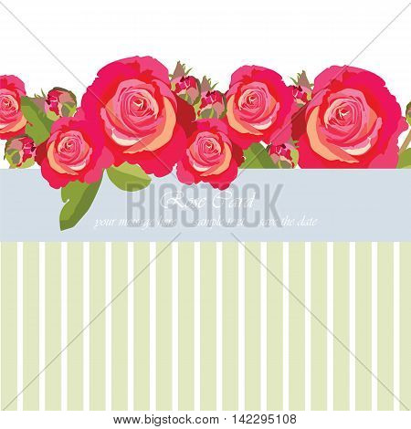 Delicate Pink Roses bouquet card. Vector rose flower for background greeting cards and invitations of the wedding birthday Valentine's Day Mother's Day