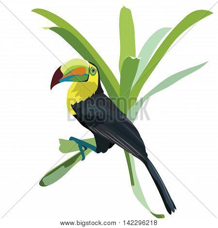 Toucan bird sitting on a flower Vector isolated