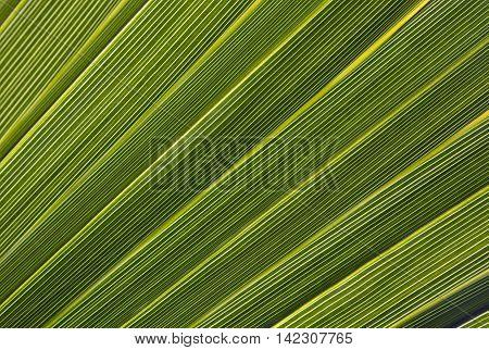 Close-up of palm leaf in back light