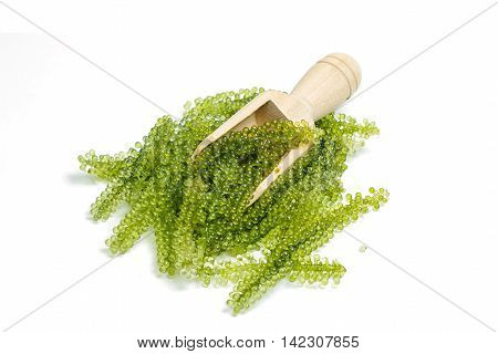 Sea grapes ( green caviar ) seaweed Healthy food.