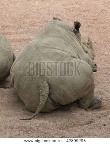 Rhino In The Jungle