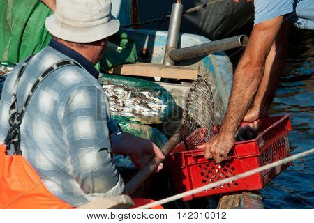 fishermen pour the fish in a plastic box clear summer day