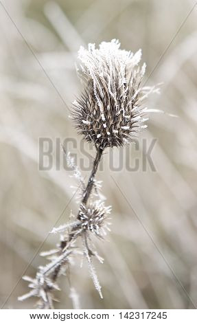 An image of autumn icy grass, frosted grass, frosty leaves, frosty morning, first frost in the autumn, frost in the field, cold, nature background, filter