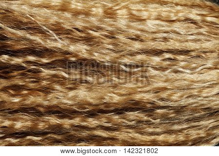 a curly hair blond girl close-up texture